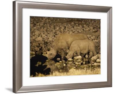 Black Rhino, Cow and Calf, Drinking at Night, Okaukuejo Waterhole-Ann & Steve Toon-Framed Photographic Print