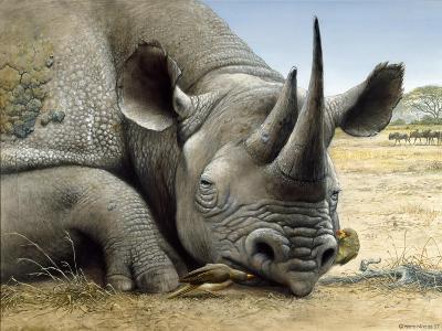 Black Rhino-Harro Maass-Giclee Print