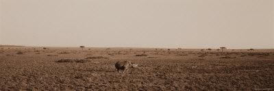 https://imgc.artprintimages.com/img/print/black-rhinoceros-on-the-plains-of-masai-mara-national-reserve_u-l-p4mvyz0.jpg?p=0