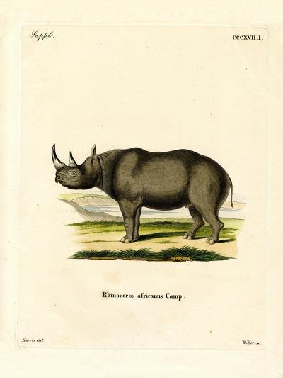Black Rhinoceros--Giclee Print