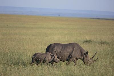 Black Rhinoceros-DLILLC-Photographic Print