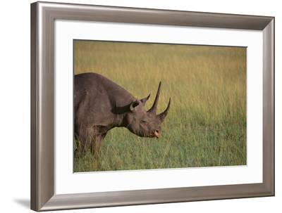Black Rhinoceros-DLILLC-Framed Photographic Print