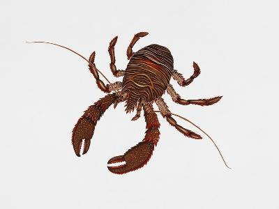 Black Squat Lobster (Galathea Squamifera), Galatheidae, Artwork by Rebecca Hardy--Giclee Print