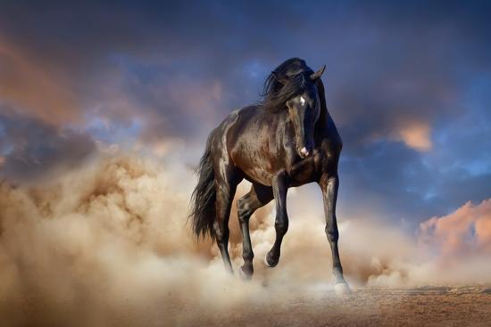 Black Stallion Horse-Callipso88-Photographic Print