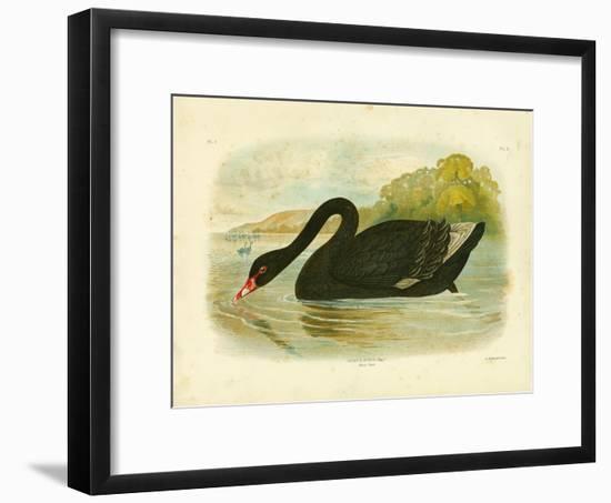 Black Swan, 1891-Gracius Broinowski-Framed Giclee Print