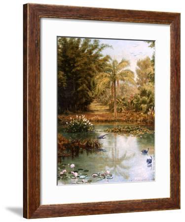 Black Swans-Charles E Gordon Frazer-Framed Giclee Print