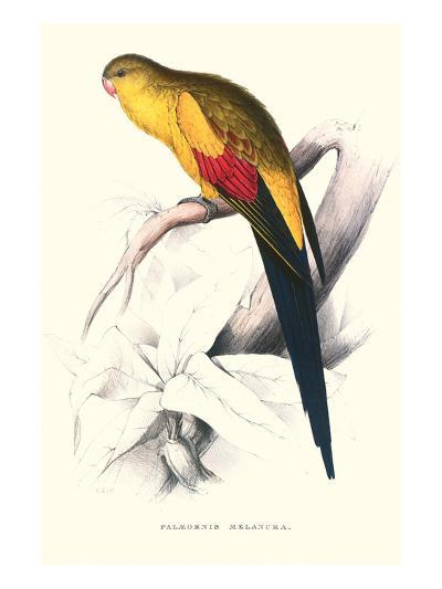 Black Tailed Parakeet(Male) - Polypelis Anthopeplus-Edward Lear-Art Print