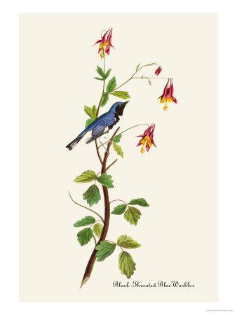 https://imgc.artprintimages.com/img/print/black-throated-blue-warbler_u-l-p27d6i0.jpg?artPerspective=n