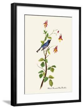 Black-Throated Blue Warbler-John James Audubon-Framed Art Print