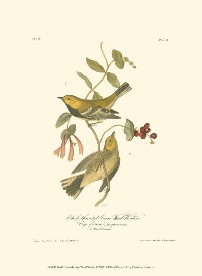 Black-Throated Green Wood Warbler-John James Audubon-Art Print