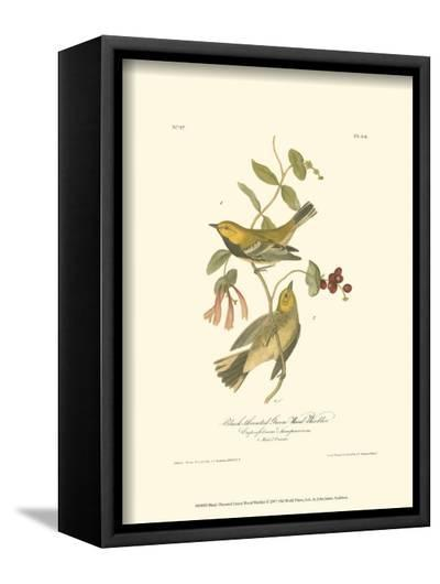 Black-Throated Green Wood Warbler-John James Audubon-Framed Canvas Print