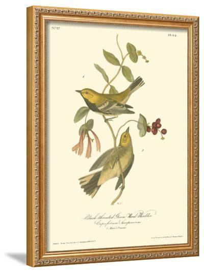 Black-throated Green Wood Warbler-John James Audubon-Framed Giclee Print