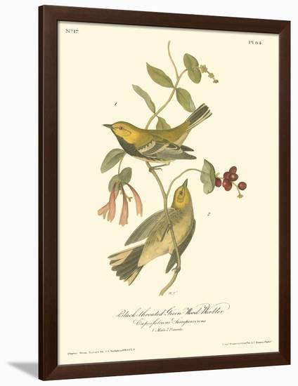 Black-throated Green Wood Warbler-John James Audubon-Framed Premium Giclee Print
