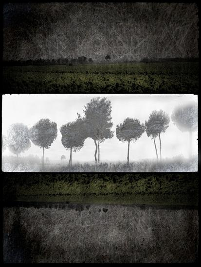 Black Tree 2-LightBoxJournal-Giclee Print