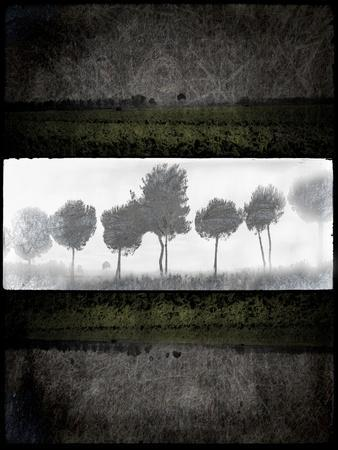 https://imgc.artprintimages.com/img/print/black-tree-2_u-l-q12v6kg0.jpg?p=0