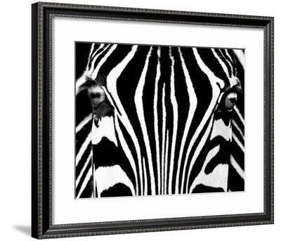 Black & White I (Zebra)-Rocco Sette-Framed Art Print