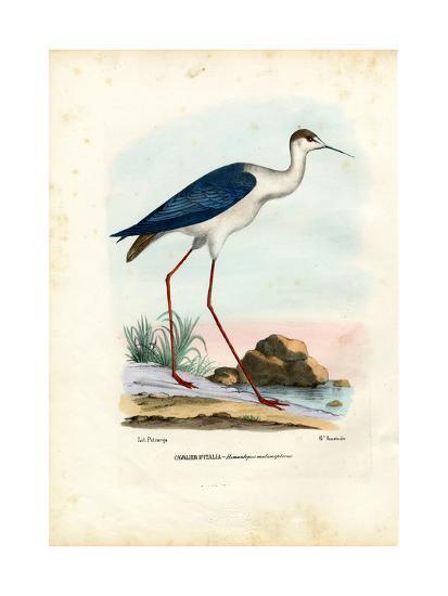 Black-Winged Stilt, 1863-79-Raimundo Petraroja-Giclee Print