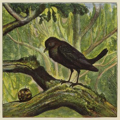 Blackbird and Snail-Ernest Henry Griset-Giclee Print