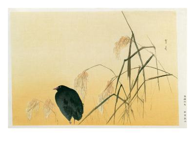 Blackbird, Edo Period-Japanese School-Giclee Print