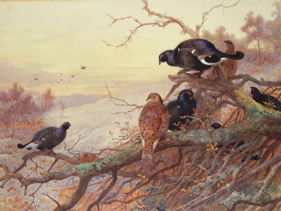 Blackgame in Winter-Archibald Thorburn-Giclee Print