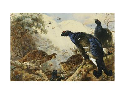 Blackgame-Thorburn Archibald-Giclee Print