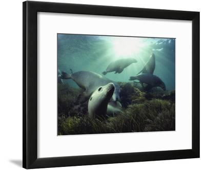 Blacktip Reef Shark--Framed Photographic Print