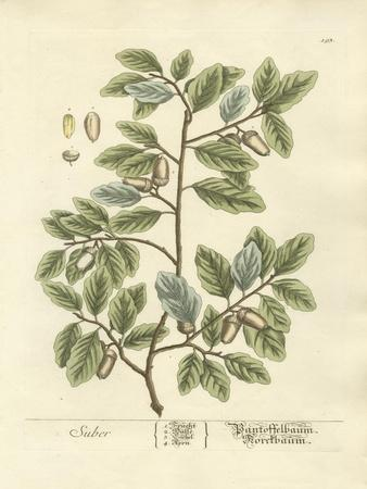 Non-Embellished Vintage Foliage I
