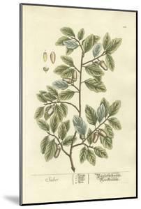 Non-Embellished Vintage Foliage I by Blackwell