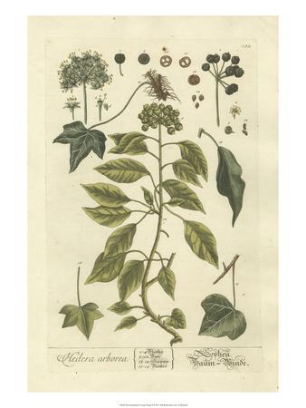 Non-Embellished Vintage Foliage II