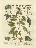 Non-Embellished Vintage Foliage I-Blackwell-Art Print