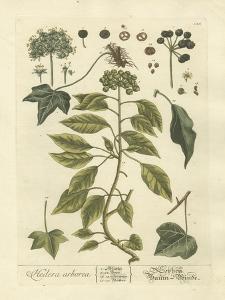 Non-Embellished Vintage Foliage II by Blackwell