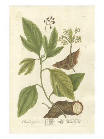Non-Embellished Vintage Foliage IV