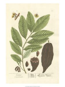 Non-Embellished Vintage Foliage V by Blackwell