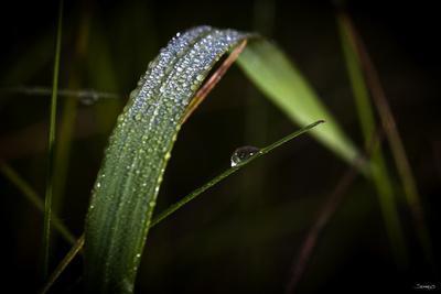 https://imgc.artprintimages.com/img/print/blade-of-grass-with-dew-drops_u-l-q10piw00.jpg?p=0