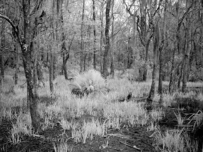 Blakeley State Park, Civil War-Carol Highsmith-Photo