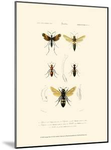 Antique Bees I by Blanchard