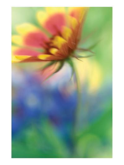 Blanket Blur-Karin Connolly-Art Print