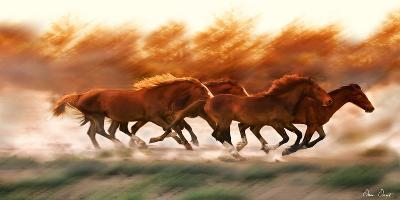 Blazing Herd II-David Drost-Photographic Print
