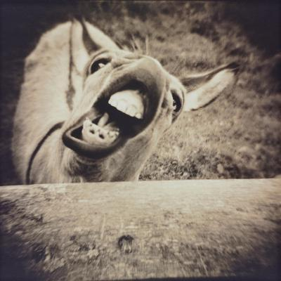 Bleating  Goat-Theo Westenberger-Photographic Print