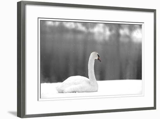 Blending in with Snow-HOWD, Howard Lau-Framed Photographic Print