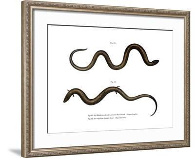 Blindworm--Framed Giclee Print