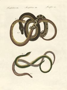 Blindworms