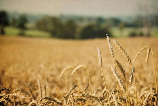 Blissful Country I Crop-Elizabeth Urquhart-Art Print
