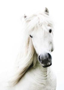 Crin Blanc by Blonde Attitude