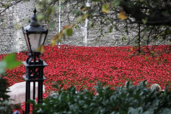 'Blood Swept Lands and Seas of Red', Tower of London, 2014-Sheldon Marshall-Photographic Print