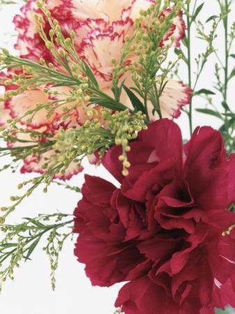 Blooming Carnations