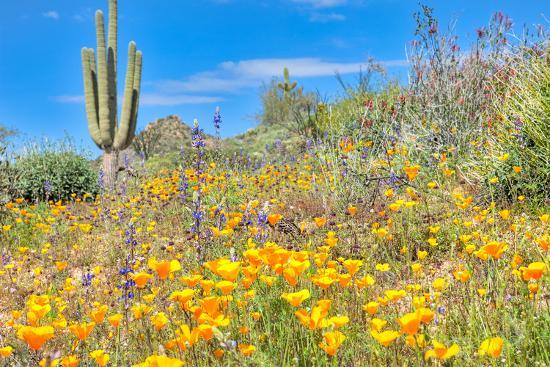Blooming Desert-Anton Foltin-Photographic Print