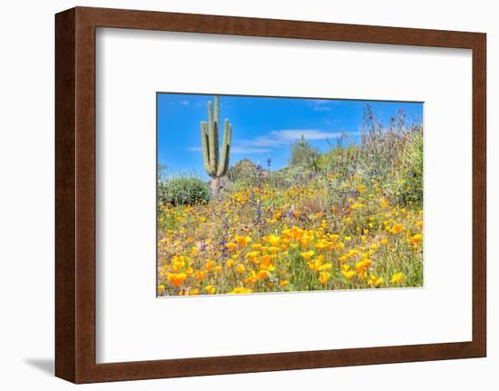 Blooming Desert-Anton Foltin-Framed Photographic Print