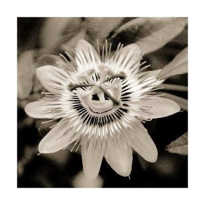 Blooming Flowers 5664-Rica Belna-Photographic Print