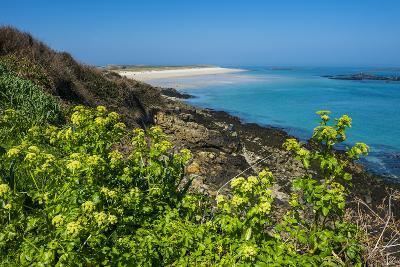 Blooming Flowers with Shell Beach in the Background, Herm, Channel Islands, United Kingdom-Michael Runkel-Photographic Print